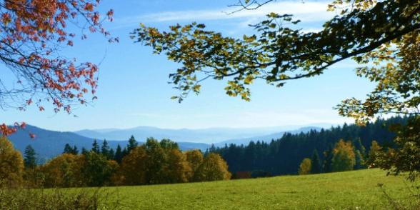 Naturbestattung Montes Mariani - Herbst im Böhmerwald