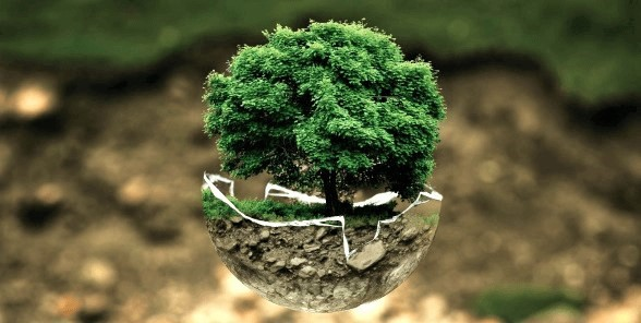 Naturbestattung Montes Mariani - Gedenkbaum - Urne zu Hause