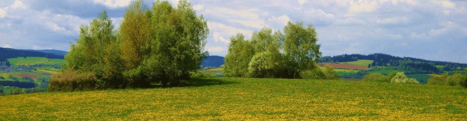 Naturbestattung Montes Mariani - Blumenwiesen